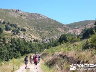 Pinar de Canencia y Mina de Plata del Indiano; excursiones de un día;asociaciones senderismo madrid